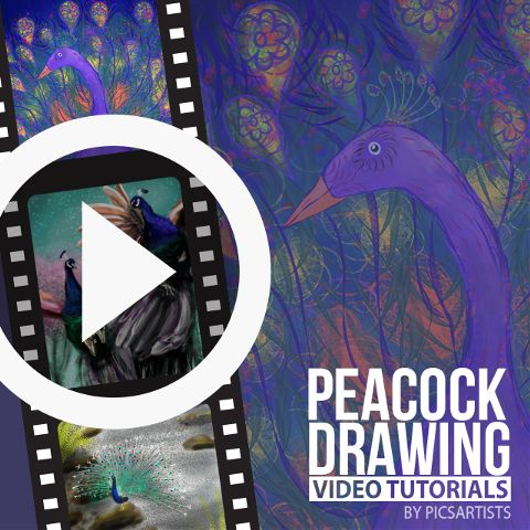 peacock drawing time lapse video