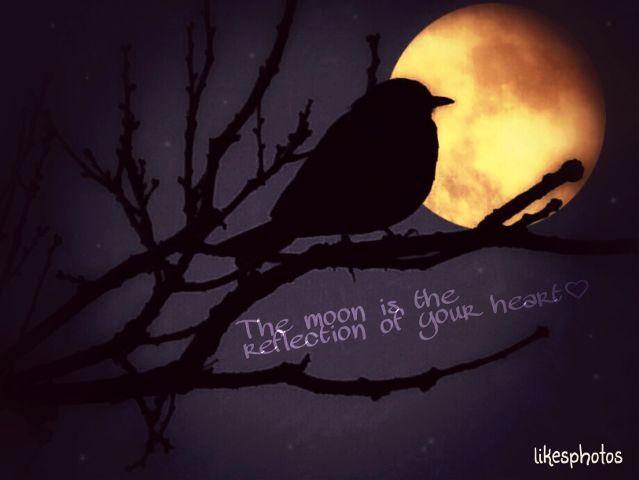 quotes,textoverlay,moon,tree,birds