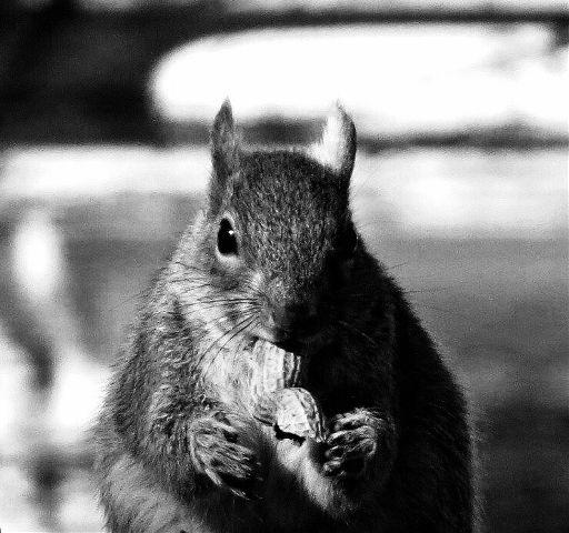 #SideLight #squirrel  #animals  #blackandwhite