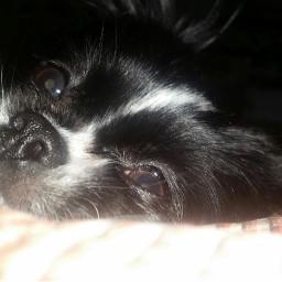puppy cute petsandanimals love