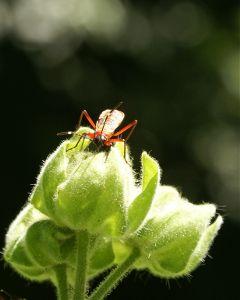photography nature macro bugs petsandanimals