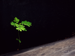plant nature photography life minimalist