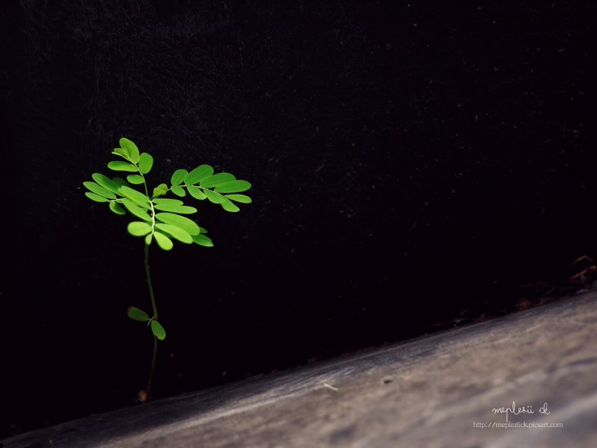 """""""Life will find the way""""  #plant #nature #photography #life #minimalist"""
