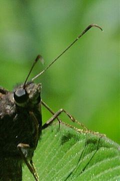 photography nature macro butterflies love