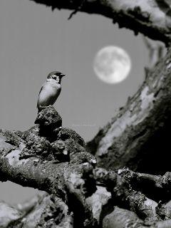 deeliriouss photography mood emotions bird