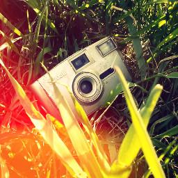 photo green beautiful spring my