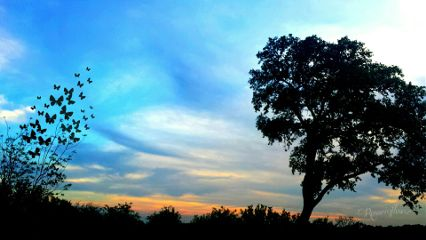 sunset nature emotions purple sureal