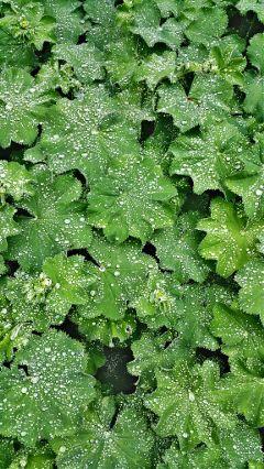 nature lotuseffect hdr rain
