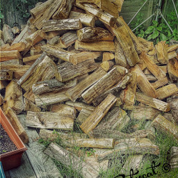 firewood randomshot picsart photography woodpile