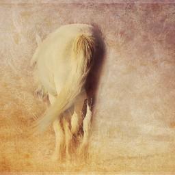 photography petsandanimals horses