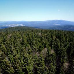 bavarianforest nature travel landscape