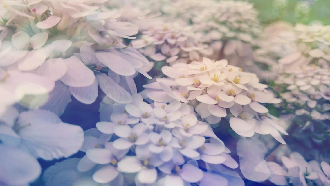 #FTEBokeh #colorful #flower #nature #photography #vintage #summer #bokeh