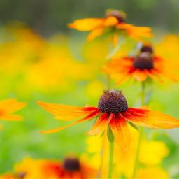 bokeh colorful cute flower nature