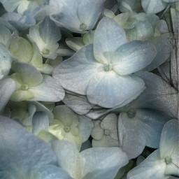 flower pencilart nature jobsite