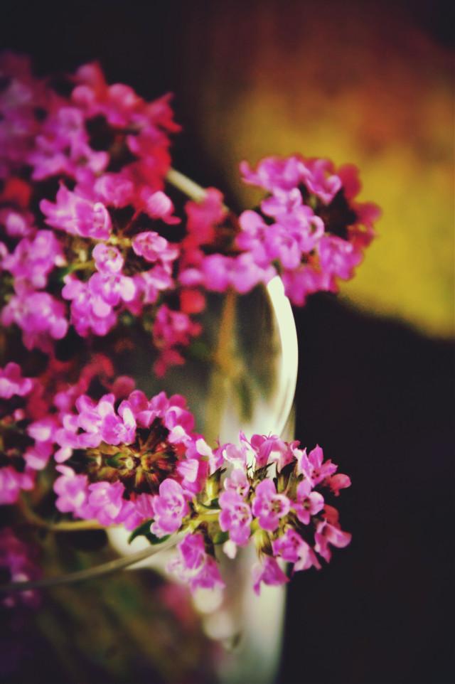 #flower   #flower