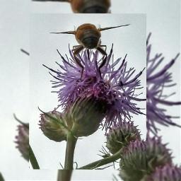 photography flower petsandanimals nature