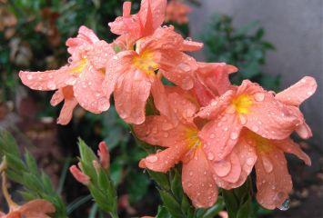 hdr flower colorful rain