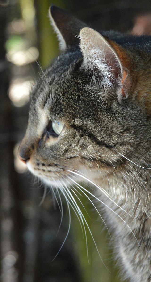 ♥♥♥   #photography #cat #animals