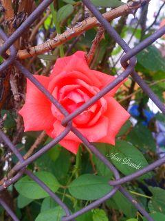 vivid freetoedit nature flower