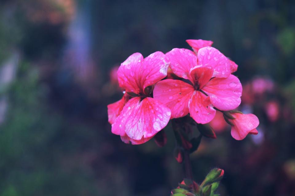 #nature #flower #colorful #rain #mask #light #dodger #summer #photography