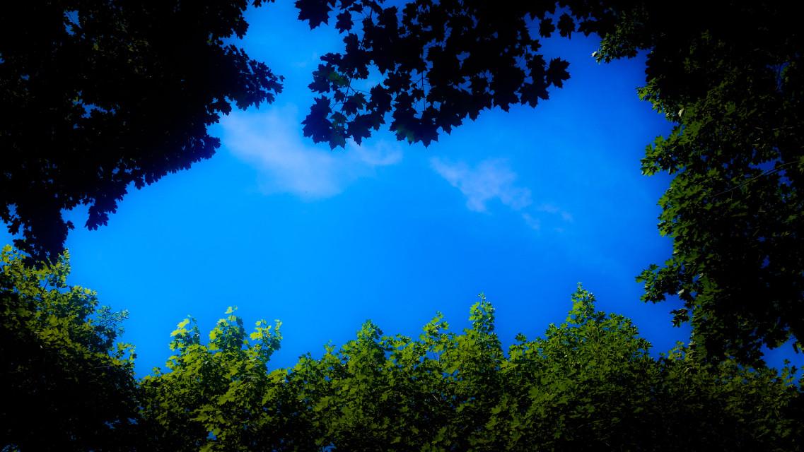 #DreamEffect #Backyard #nature #colorsplash