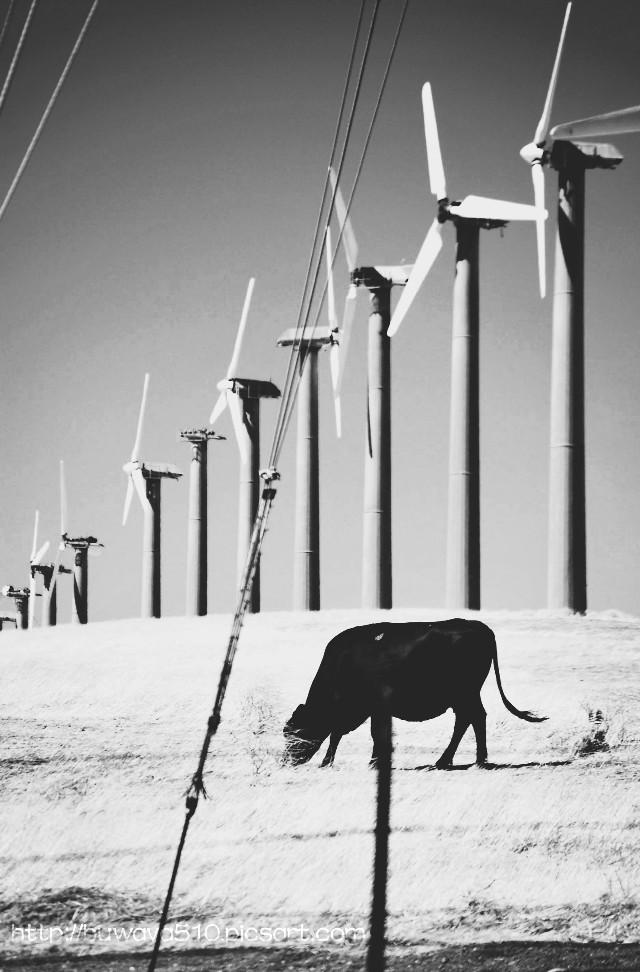 #blackandwhite #photography #windmill #petsandanimals #farm
