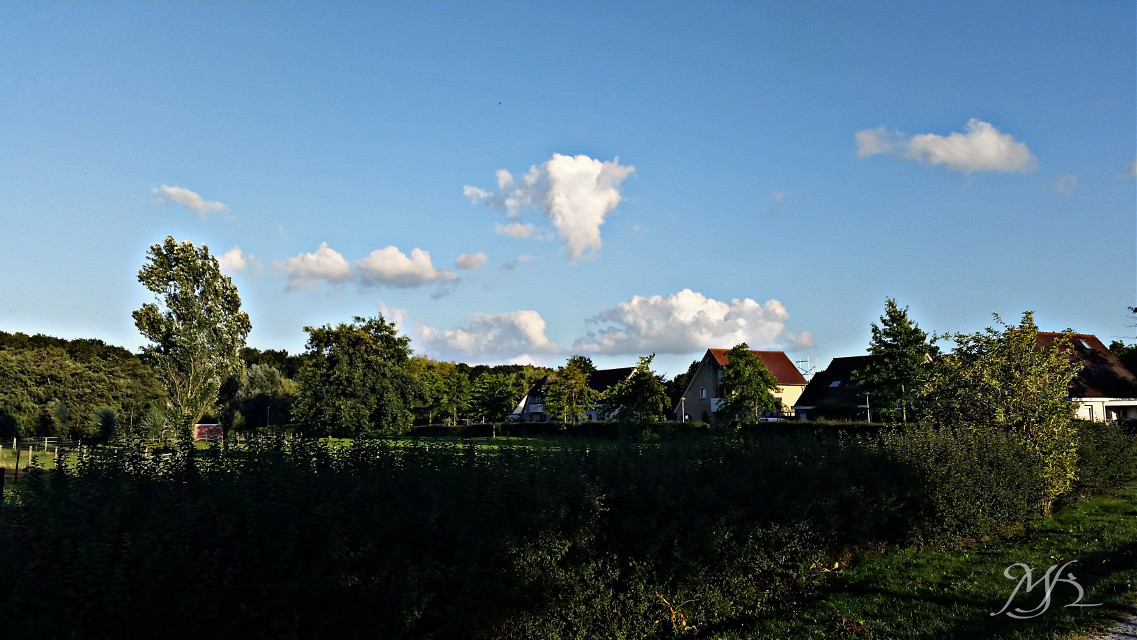 Holland #photography #summer