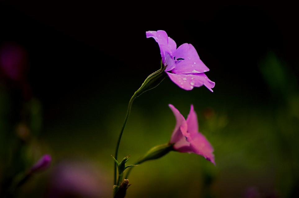 #bokeh #colorful #flower #nature #photography #macro #summer #flowers #closeup #macronature #macrolens #macroart #macroworld #flowerart