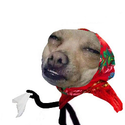 мем mem dog picture картинка