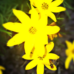 likeforlike repostforrepost flowers yellow beautiful