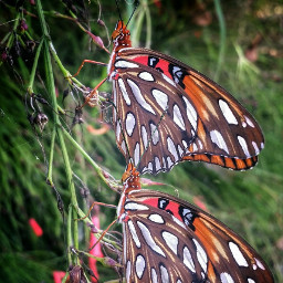 repeating photography macro butterfly