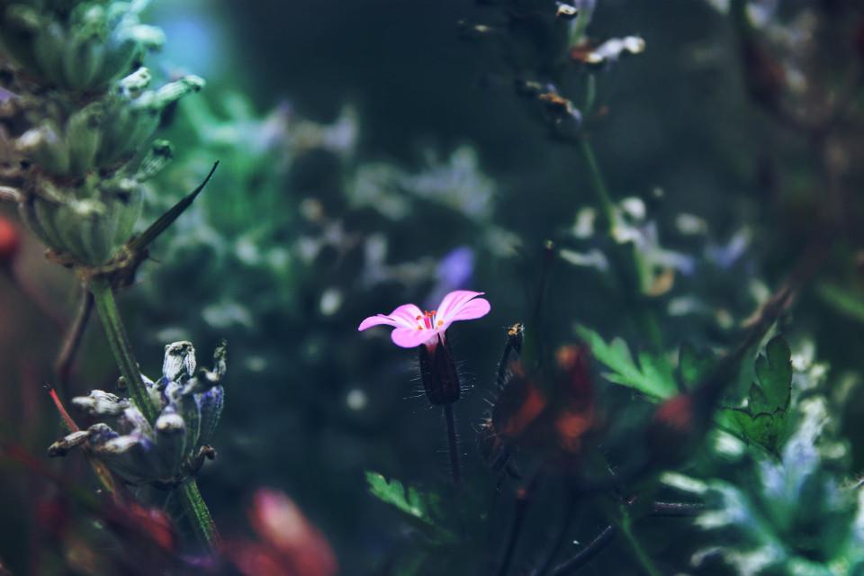 #nature #flower #colorful  #mask #light #dodger #summer #photography