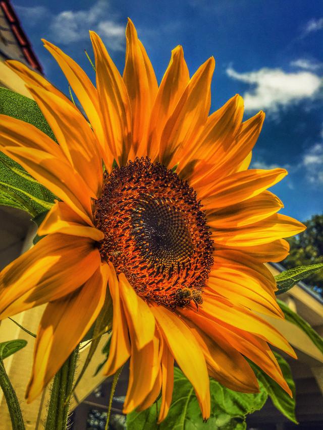 #bee #colorful #colors #cute #emotion  #petsandanimals  #nature  #spaziergang #summer #walk #photography #naturephotography #luXxXs