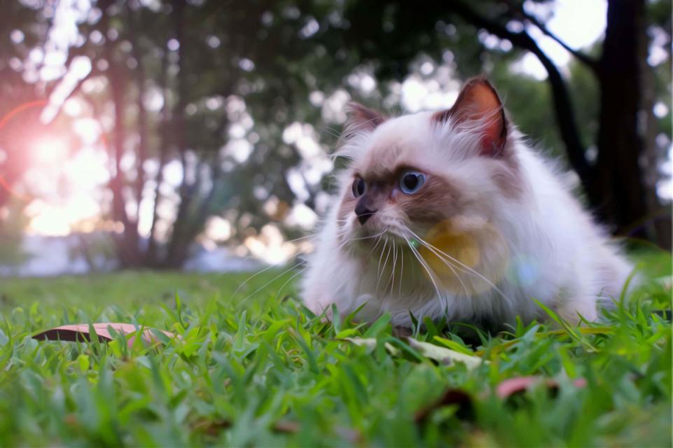 sarsi cat #nature #photography #love #travel #cat #phuket #tree # smile