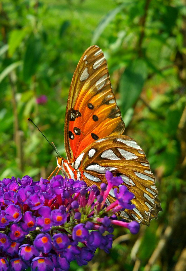 #butterfly #colorful#flower  I love to see these guys flying about