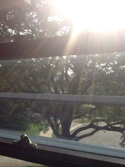 photography nature roofshot tree sunlight