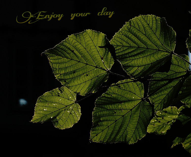 #photography #nature  #green  #leaf
