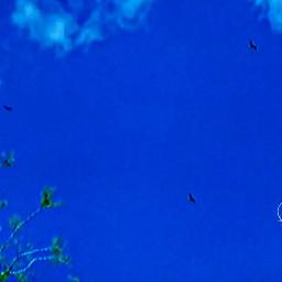blue sky summer photography