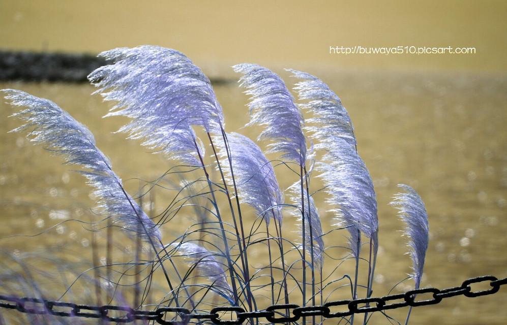 #photography #hue #dailyinspiration #madewithpicsart