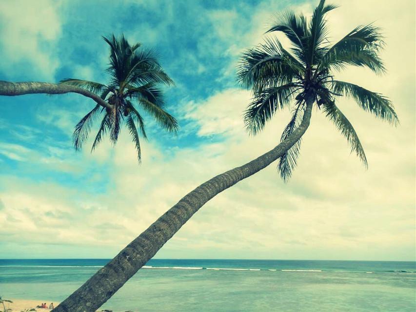 #beach  #palmtrees  #peaceful