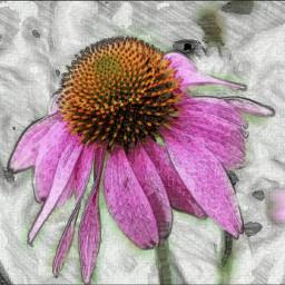 colorsplash skecher photography nature myshot