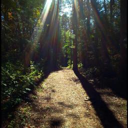 photography nature emotions pathways