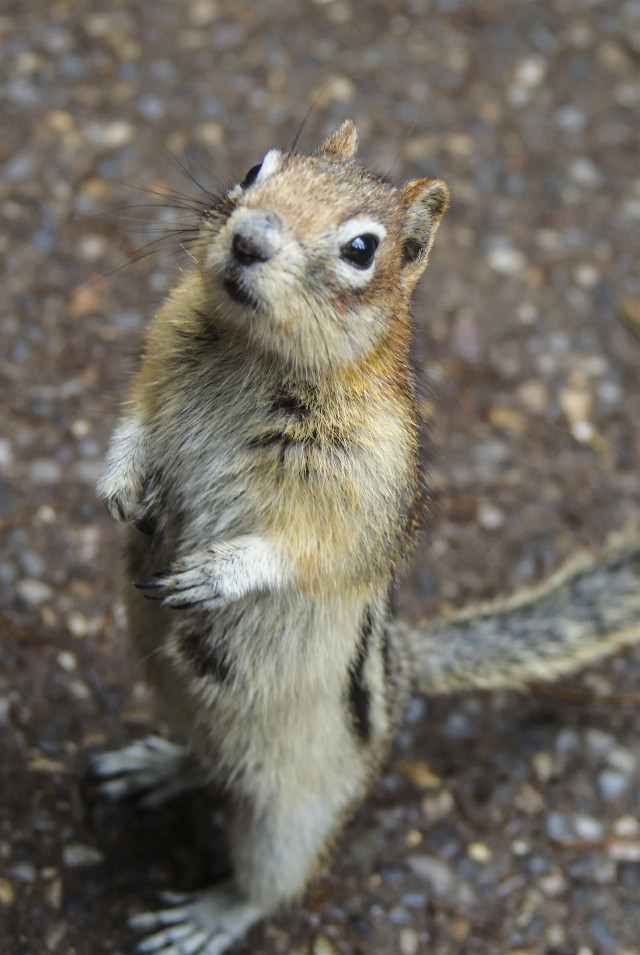 I offered this little animal a peanut but it said it only took cash now. How times have changed. #photography #nature  #wildlife