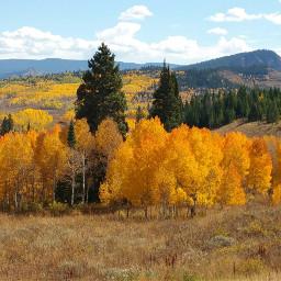 autumn fall aspen rockymountains nature
