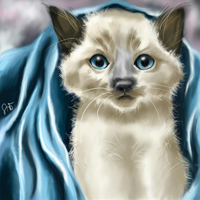 My little blue blanket   #petsandanimals  #cat  #drawing  #digitaldrawing