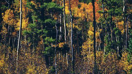 nature fall autumn foliage photography