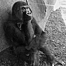 blackandwhite petsandanimals blackonblack animals retro