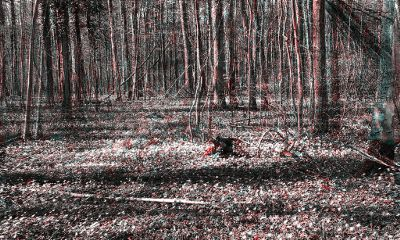 wald bäume holga freetoedit b