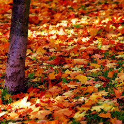 nature colorful autumn freetoedit offcenter wppfallcolors dpcleaves pcleaves