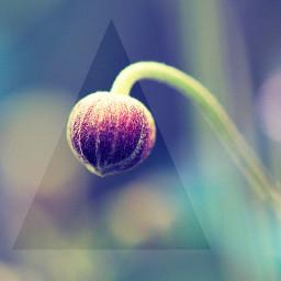 triangle flower raise hope grow